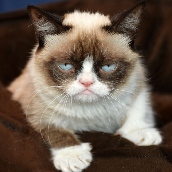 Grumpy-Cat-Releases-Second-Book